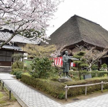 倉敷市内で桜が満開でした 2-4
