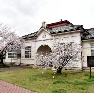 倉敷市内で桜が満開でした 2-3
