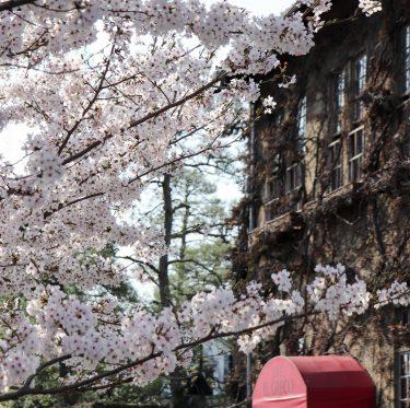 酒津公園と美観地区の桜(2018/3/30) 2-1