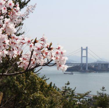 下津井城跡と田土浦公園 桜と瀬戸大橋(2018/3/31) 2-3