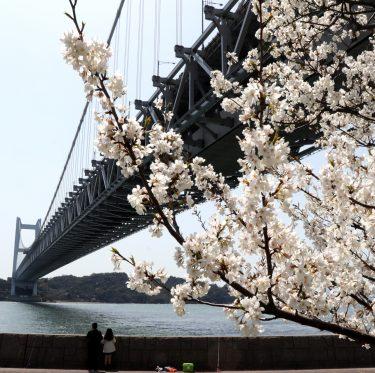 下津井城跡と田土浦公園 桜と瀬戸大橋(2018/3/31) 1-3