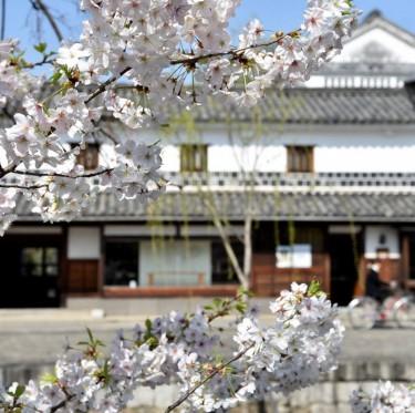 倉敷酒津公園と美観地区の桜 2-2