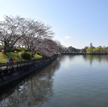倉敷酒津公園と美観地区の桜 3-2