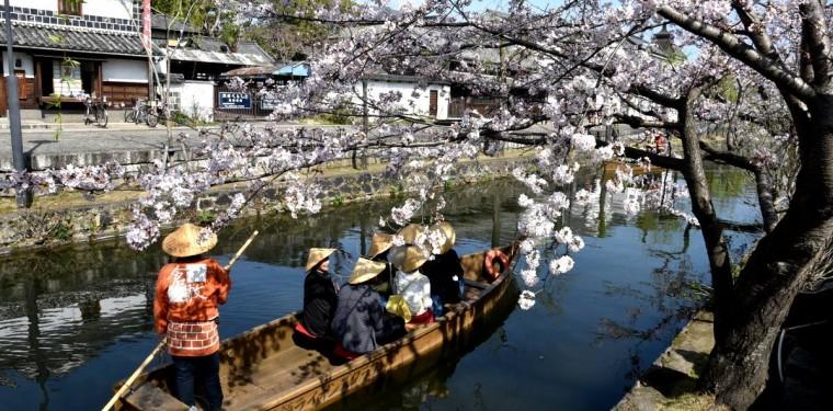 倉敷酒津公園と美観地区の桜
