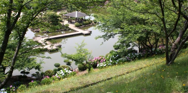 倉敷市種松山公園西園地のあじさい 2-1