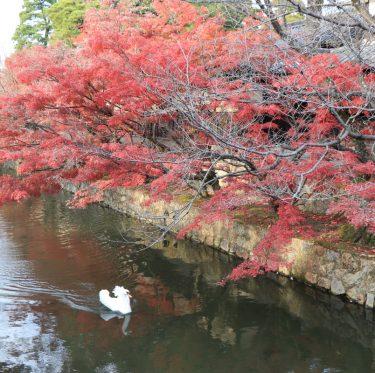 秋色に染まる倉敷美観地区。 1-2