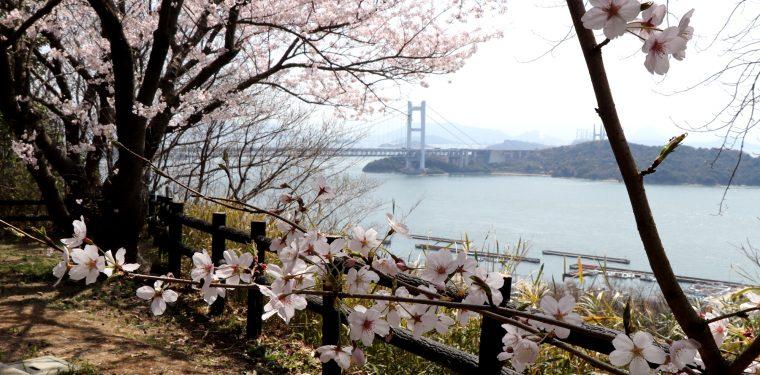 下津井城跡と田土浦公園 桜と瀬戸大橋(2018/3/31)