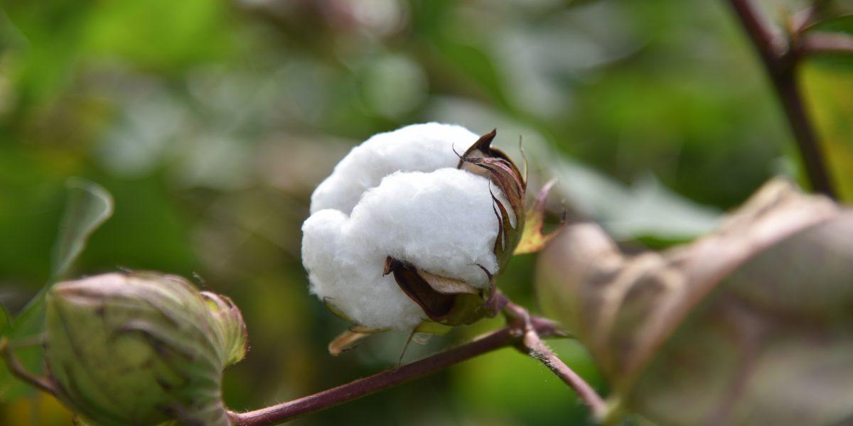 日本一の繊維産業のまち倉敷