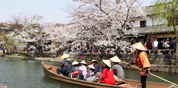 美観地区の桜 平成31年 4月6日  1-1