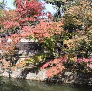 2019 井上家住宅の保存修理 3-4
