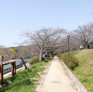 酒津公園の桜の様子(令和2年3月21日) 1-2