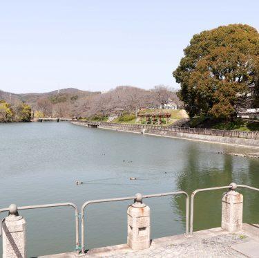 酒津公園の桜の様子(令和2年3月21日) 3-2