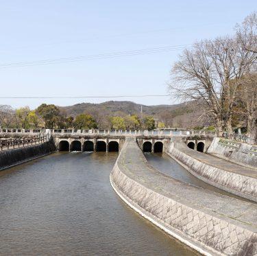 酒津公園の桜の様子(令和2年3月21日) 3-1