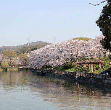 酒津公園の桜(令和2年4月4日) 1-3