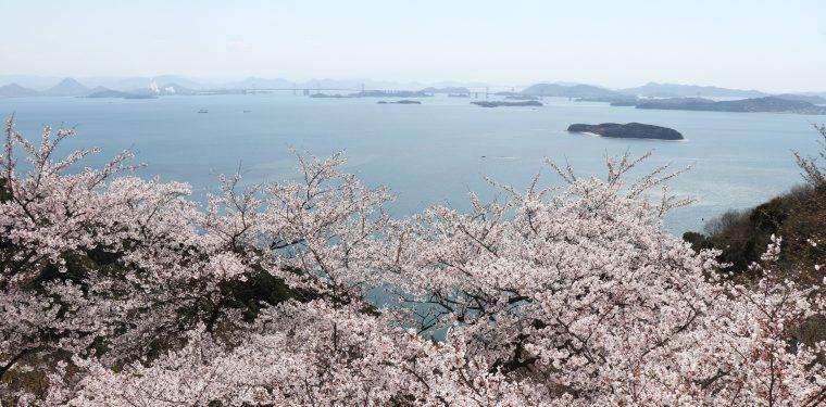 王子が岳の桜(令和2年4月5日)