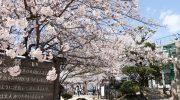 種松山の桜(令和2年4月5日)